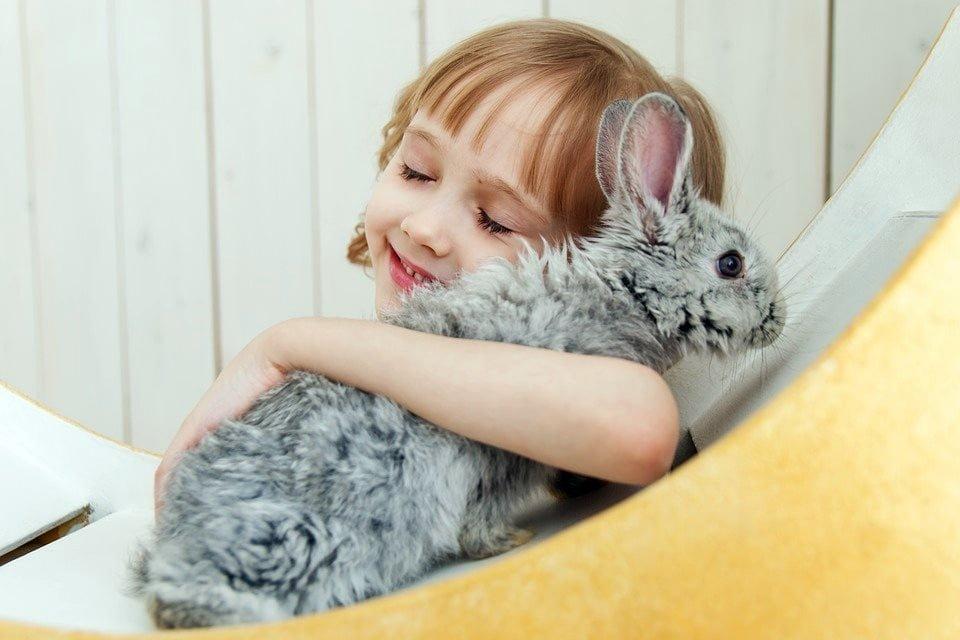 Evcil Tavşan Türleri