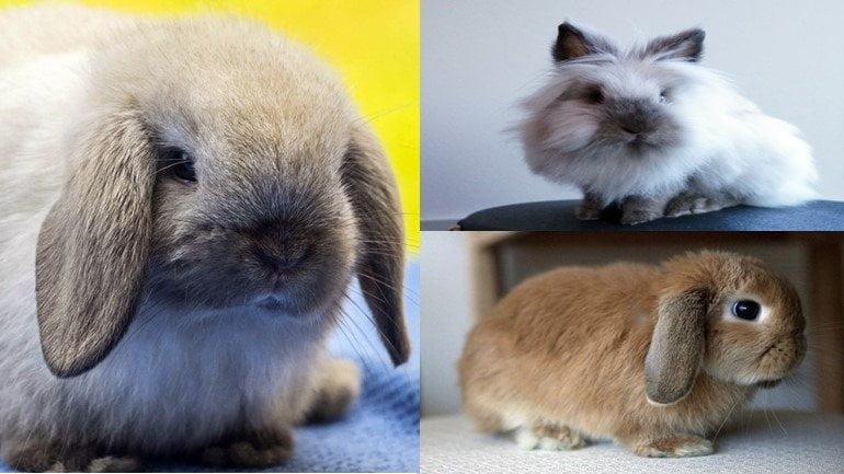Küçük Tavşan Türleri