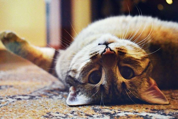 Kedilere isimleri nasıl öğretilir?