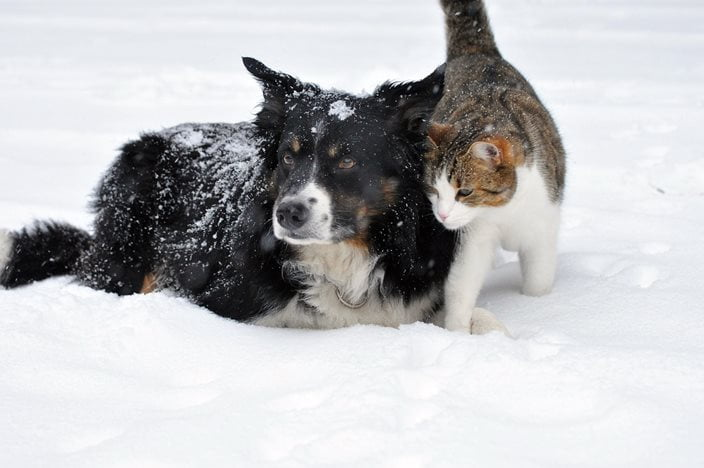Kış aylarında sokak hayvanları için neler yapmalı?