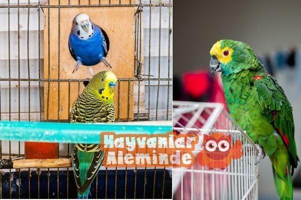 Kuşlara tuvalet eğitimi verilebilir mi?