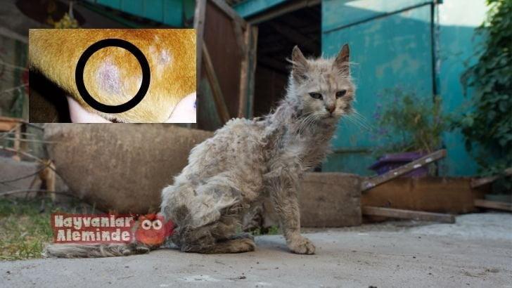 Hayvanlarda Mantar Hastalığı Neden Olur?