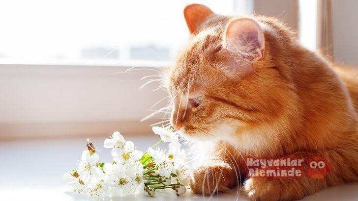 Kedilerin Koku Bırakması Nasıl Önlenir?