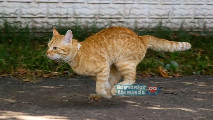 Kediler neden evden kaçar?