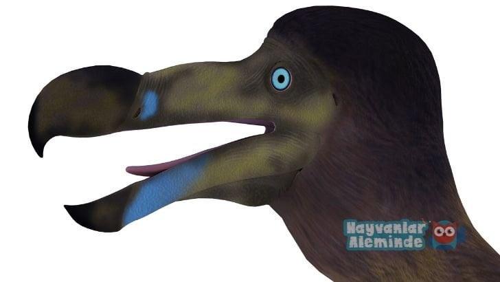 Dodo kuşu gagası