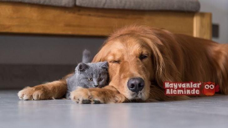 Kedilerde ve köpeklerde hamilelik nasıl anlaşılır?