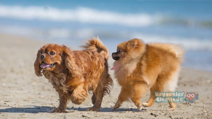 Köpeklere sosyalleştirme eğitimi