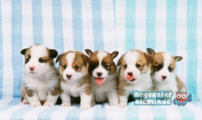 Köpekler İçin Yabancı İsim Önerileri