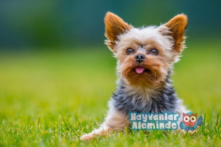 dişi köpekler için yabancı isimler