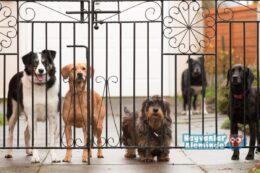 En İyi Bekçi Köpeği Türleri