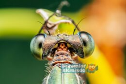 Hayvanlar Aleminden 10 İlginç Bilgi