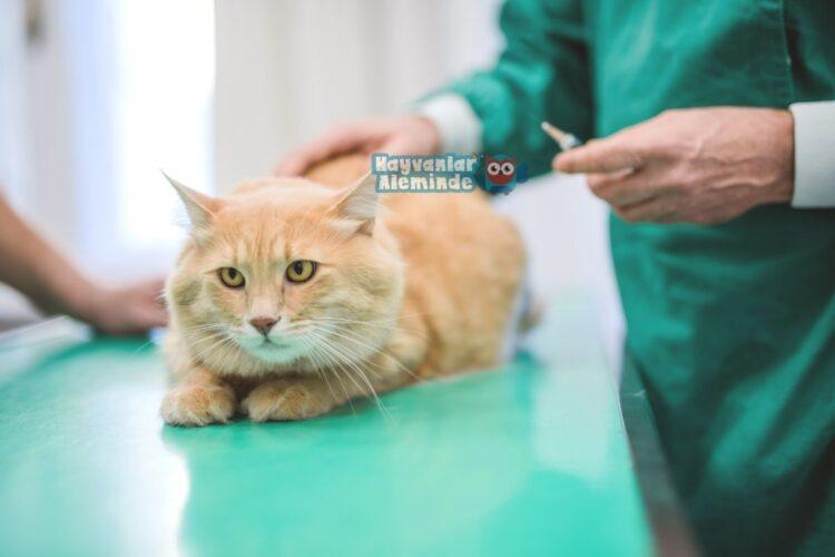 kedilere aşı yapılmazsa ne olur