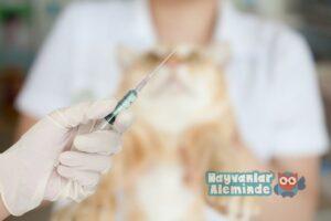 kedilerde aşının önemi