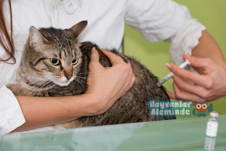 kedi aşı