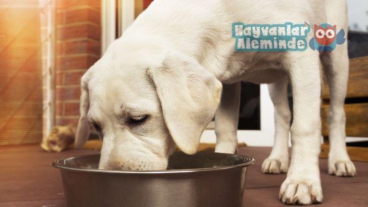 köpekler için pirinç lapası