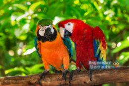 Macaw Papağanı Türleri ve Özellikleri