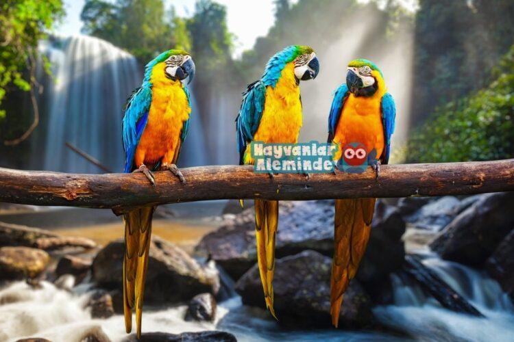 Macaw papağanı türleri