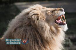Dişleri En Güçlü Hayvanlar Hangileridir?