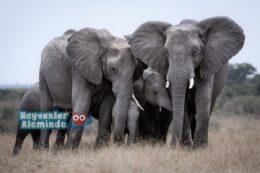 Filler Hakkında Merak Ettiğiniz 10 Bilgi