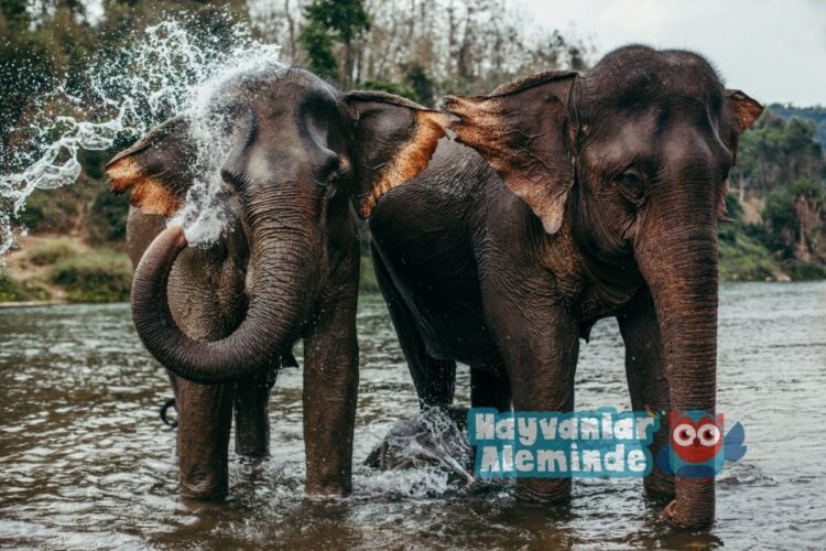 filler ne kadar yaşar