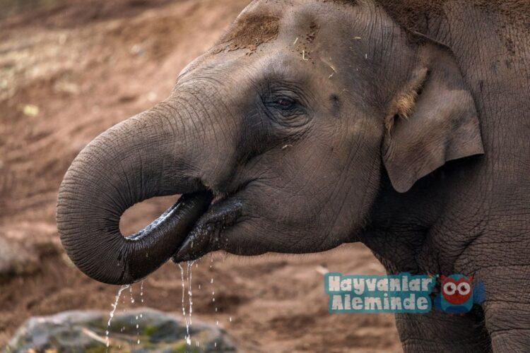filler ne yer