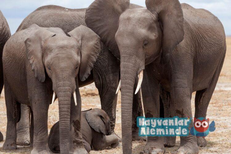 fillerin boyu ne kadardır