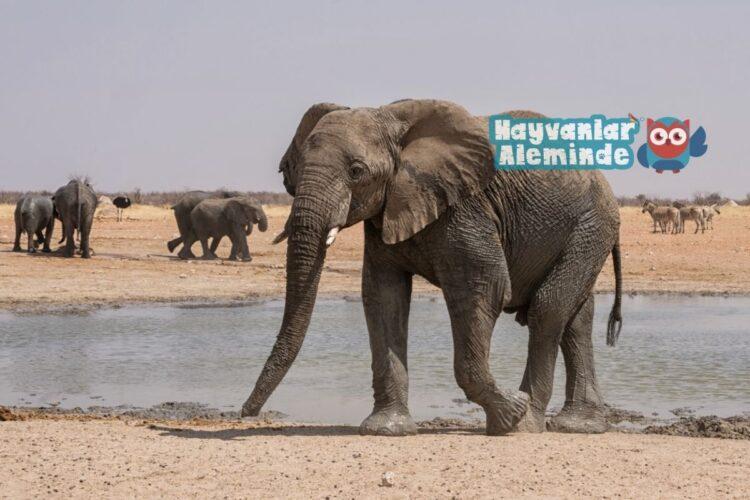 fillerin özellikleri