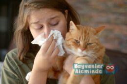 Kedi Alerjisi Belirtileri ve Tedavisi