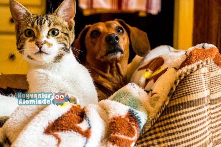 kedi köpek dostluğu