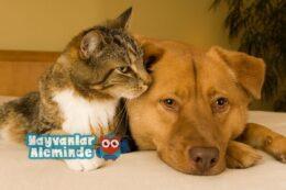 Kedilerde ve Köpeklerde Kan Grupları