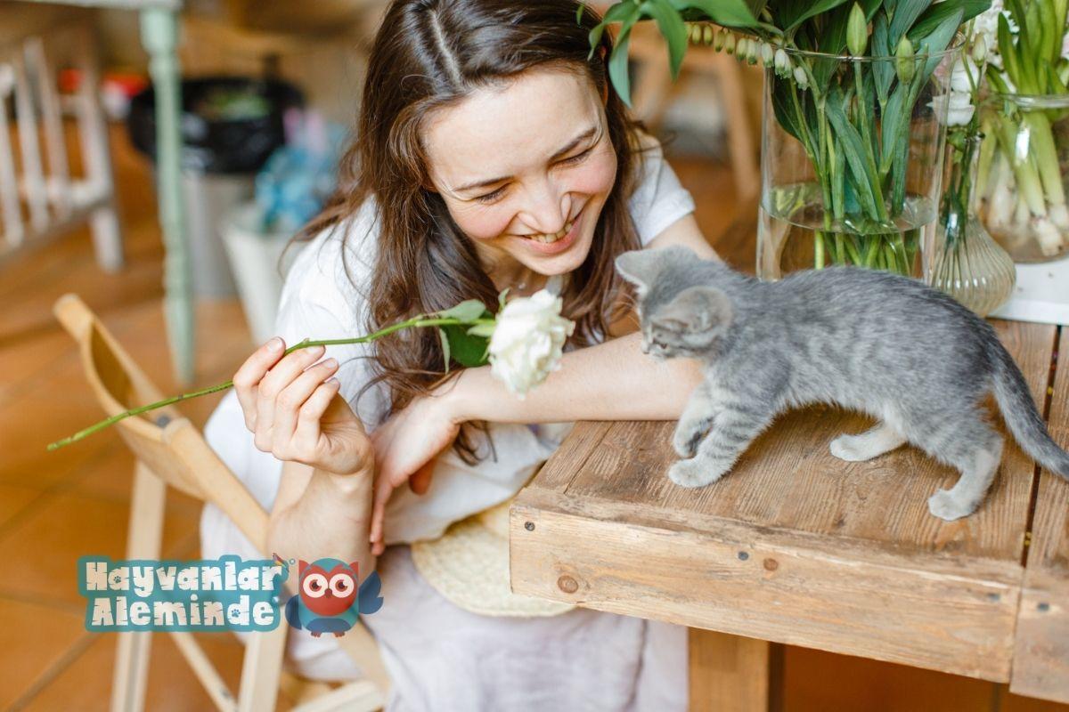 kedileri mutlu etmenin yolları