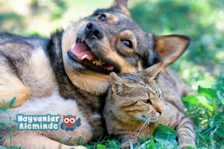 köpekler neden kedileri kovalar