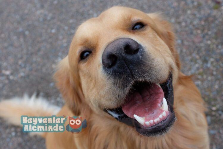 köpekleri mutlu etmek