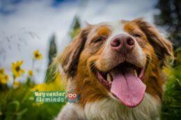 Köpekleri Mutlu Etmenin Yolları