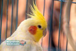 Kuş Bakımı Hakkında Bilmeniz Gereken 5 Bilgi