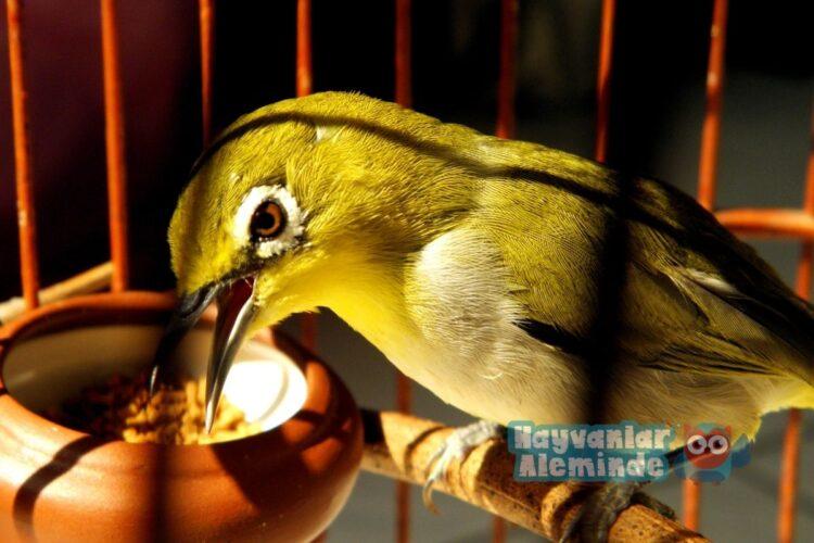 kuş bakımında dikkat edilmesi gerekenler