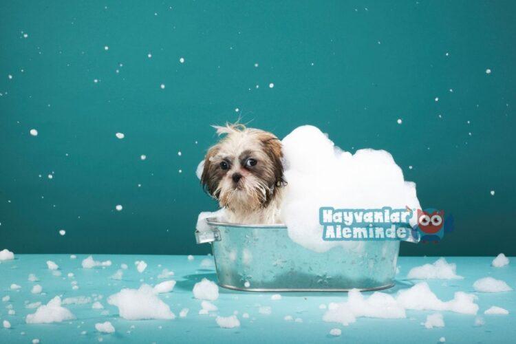 yavru köpekler banyo için alınacaklar
