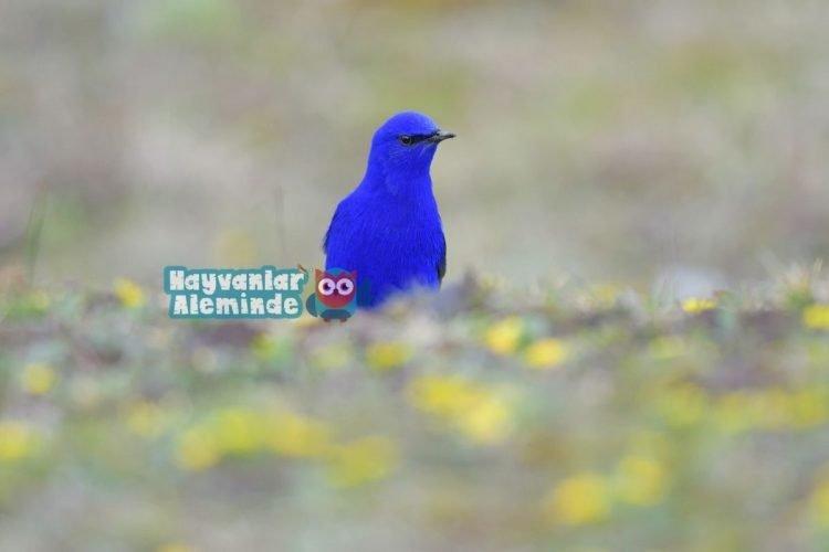 Granda - Dünyanın en güzel renkli kuşları