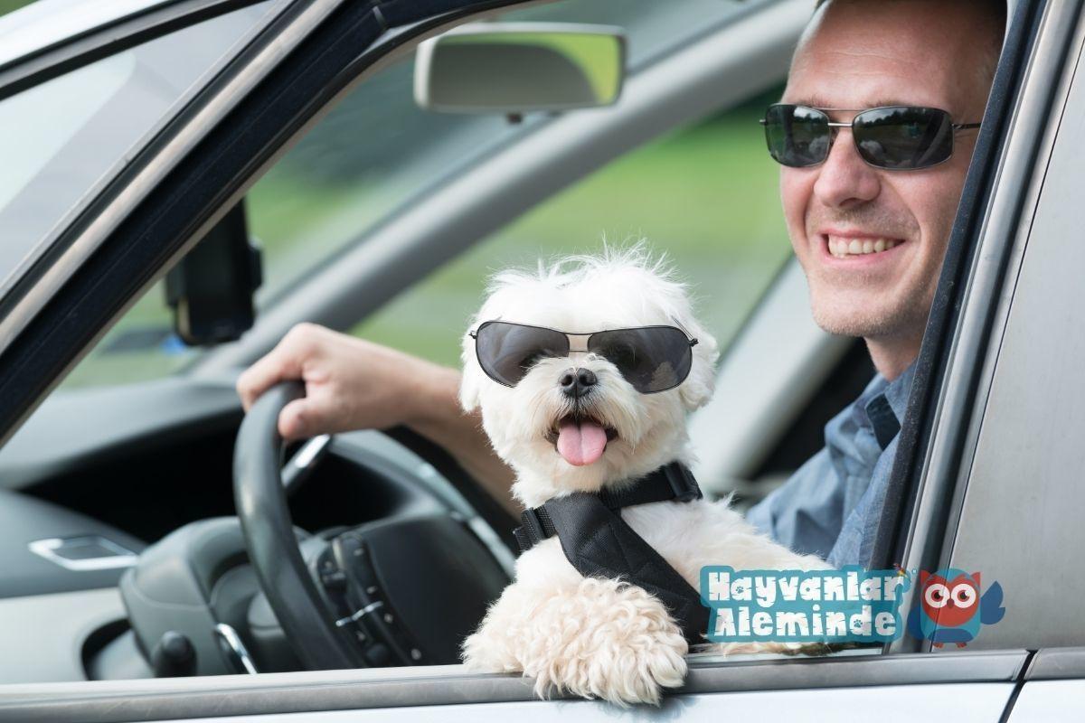 Köpekler Arabaya Nasıl Alıştırılır