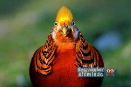 Dünyanın En Güzel Renkli Kuşları