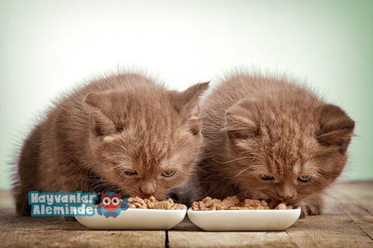 en iyi kedi maması markaları