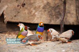 5 En Sessiz Kuş Türü ve Özellikleri