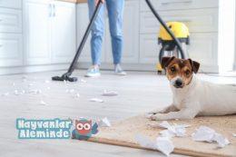 Evcil Hayvan Olan Evde Temizlik Nasıl Yapılmalı?
