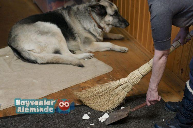 evcil hayvan olan evde temizlik malzemeleri