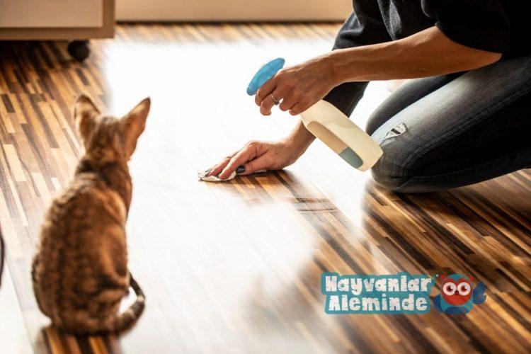 kedi beslenen evde temizlik
