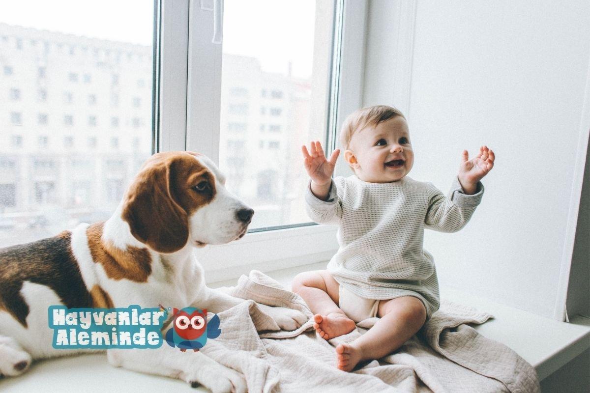köpeği bebeğe alıştırmak