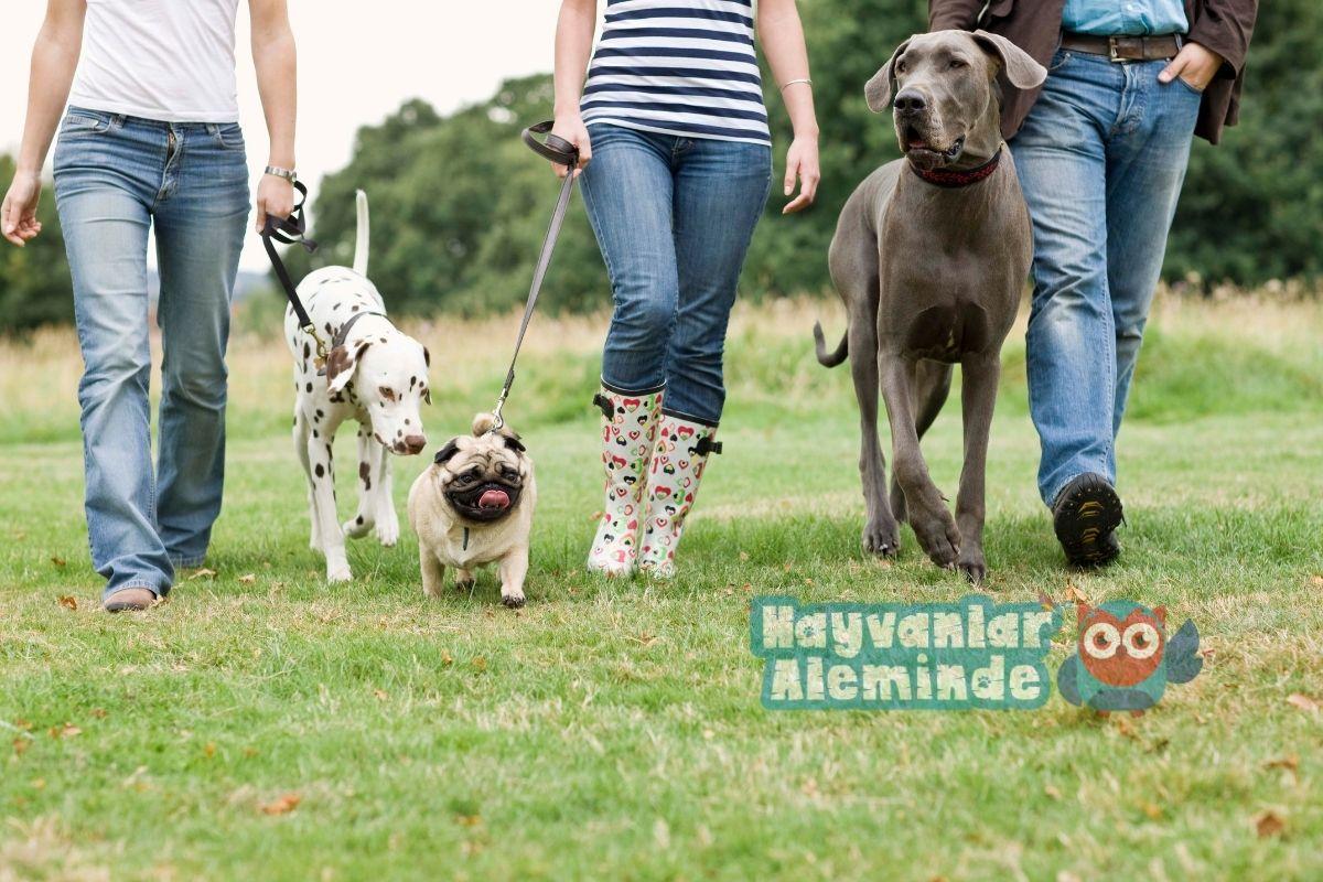 köpekler günde kaç saat yürümeli