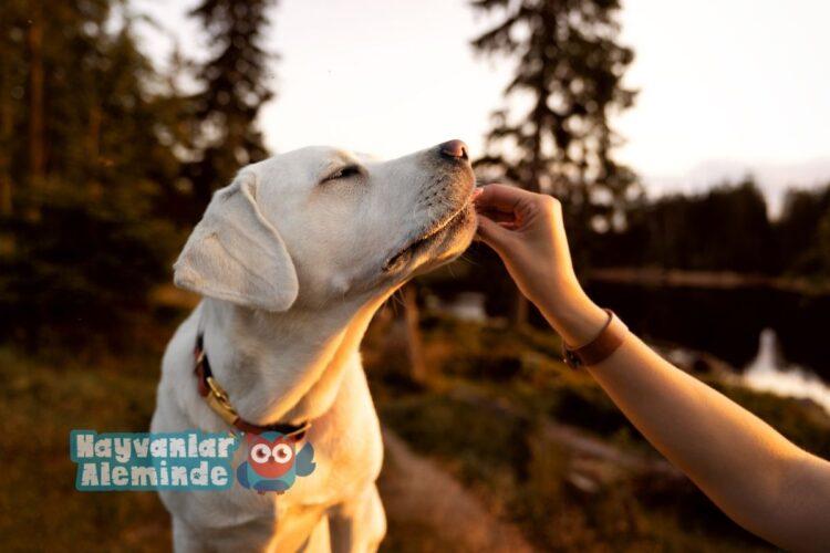 köpeklerde protein fazlalığı nedenleri
