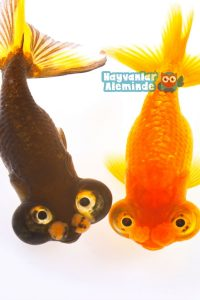 süs balığı isim önerileri