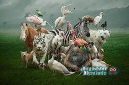 Dünyadaki En Güçlü 10 Hayvan